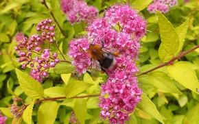 Картинка цветы, природа, растения, насекомое, свежий, естественные фотографии