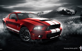 Обои Shelby, GT500, Car, Muscle, Red, 2014, Snake, Mustang, Ford