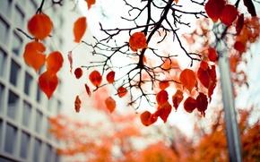Картинка осень, листья, ветки, красные