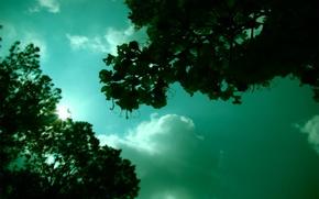 Обои зелень, небо, солнце, настроение