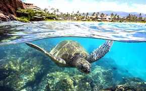 Картинка вода, прозрачность, океан, черепаха, лагуна