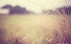 Картинка макро, widescreen, обои, растение, размытие, wallpaper, широкоформатные, background, macro, blur, полноэкранные, HD wallpapers, plant, широкоэкранные, ...