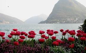 Картинка вода, горы, тюльпаны