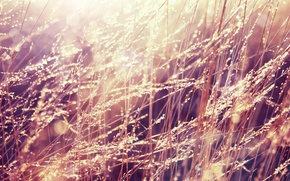 Обои трава, капли, свет, роса, утро