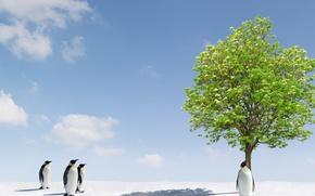 Картинка Nature, Tree, Pinguin