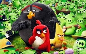 Картинка cinema, animation, guitar, Red, game, bird, camera, feathers, cartoon, movie, series, film, friends, egg, angry, …