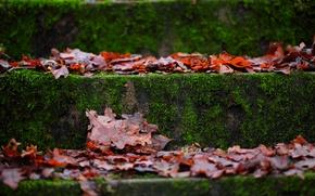 Картинка осень, макро, листва, мох, ступени