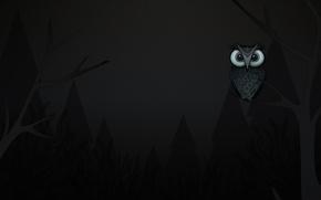 Картинка деревья, сова, ветка