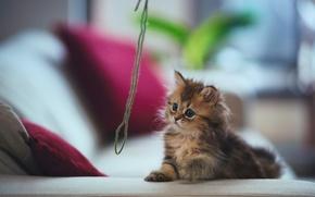 Картинка кошка, котенок, диван, игра, подушки, нитки, Daisy, Ben Torode