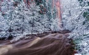 Картинка снег, деревья, пейзаж, горы, река, поток