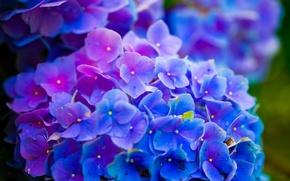 Картинка Nature, Earth, flowers, Environment