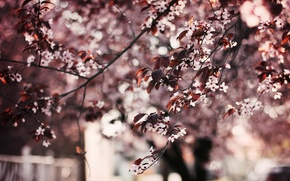 Картинка листья, деревья, цветы, фон, дерево, обои, wallpaper, цветочки, широкоформатные, flowers, листики, background, leaves, полноэкранные, HD …