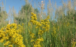 Картинка цветок, лето, трава, природа