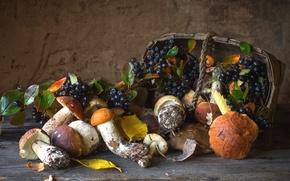 Обои арония, корзина, грибы, осень