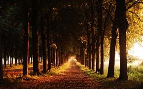 Картинка осень, деревья, тропа, вечер, аллея
