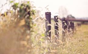 Картинка трава, свет, забор