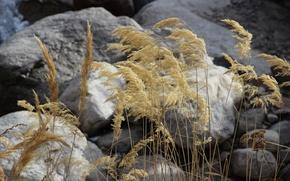 Картинка осень, макро, камни, сухая трава