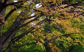 Картинка Осень, Деревья, Листья, Ветви, Fall, Autumn, Colors, Trees, Leaves