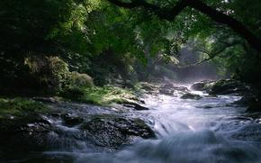 Картинка деревья, природа, река, камни, поток