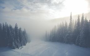 Обои ёлки, туман, зима