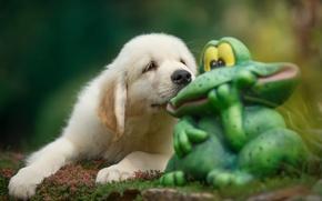 Картинка щенок, жаба, ретривер