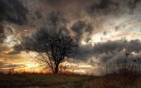 Картинка трава, облака, Дерево, лужа