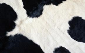 Обои шерсть, корова, черный, бурёнка, белый, текстуры