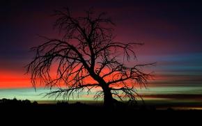 Картинка twilight, tree, dusk, branches, darkness, silhouettes