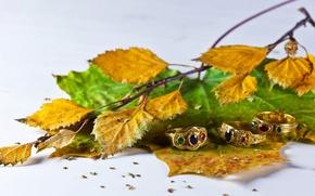 Картинка листья, украшения, кольца