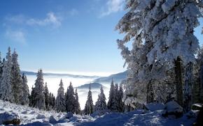 Картинка зима, снег, ели
