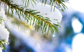 Картинка зима, макро, снег, елка, капля, ель, nature, hq wallpaper