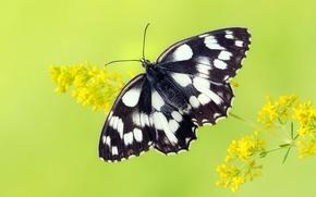 Картинка бабочка, крылья, насекомое