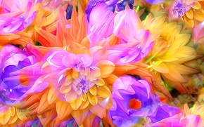 Обои цветы, лепестки, сад, клумба