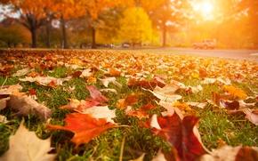 Картинка дорога, листья, макро, пейзаж, природа, road, close-up, landscape, nature, красивые, beautiful, солнечные лучи, leaves, sun, …
