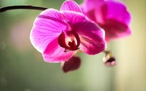 Картинка минимализм, Цветок, орхидея