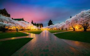 Обои деревья, парк, весна, Япония