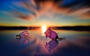 Картинка цветы, солнце, вода, отражение, бутоны