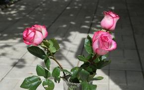 Картинка цветы, розы, ваза, розовый цвет