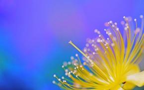 Картинка лепестки, краски, экзотика, цветок