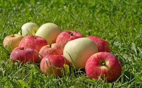 Обои зелень, фрукты, мокрые, трава, яблоки, поляна