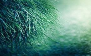 Картинка трава, природа, зеленая