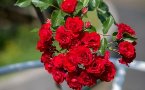 Обои макро, ветка, роза
