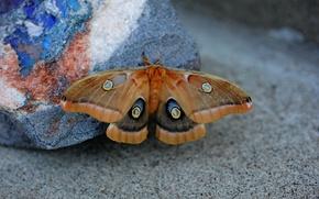 Картинка фон, бабочка, камень, размытость