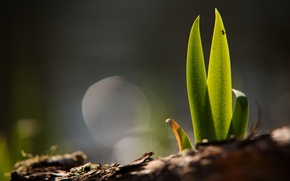 Картинка зелень, трава, земля, росток, почва