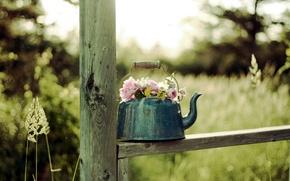 Картинка цветы, фон, чайник