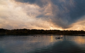 Картинка небо, облака, пейзаж, птицы, тучи, озеро, пруд, берег, вечер, семья, пара, сумерки, лебеди, птенцы, водоем, …