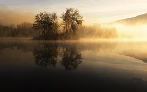 Обои озеро, утро, деревья, туман