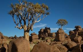 Картинка небо, деревья, пейзаж, камни, Африка, Намибия
