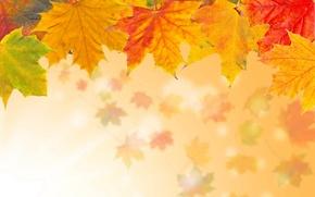 Картинка кленовые, осень, листья, желтые