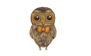 Картинка сова, птица, очки, белый фон, живопись, бант, бантик, owl